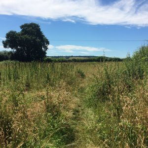 A wonderful walk back across the fields from Aldbury Church to the station.